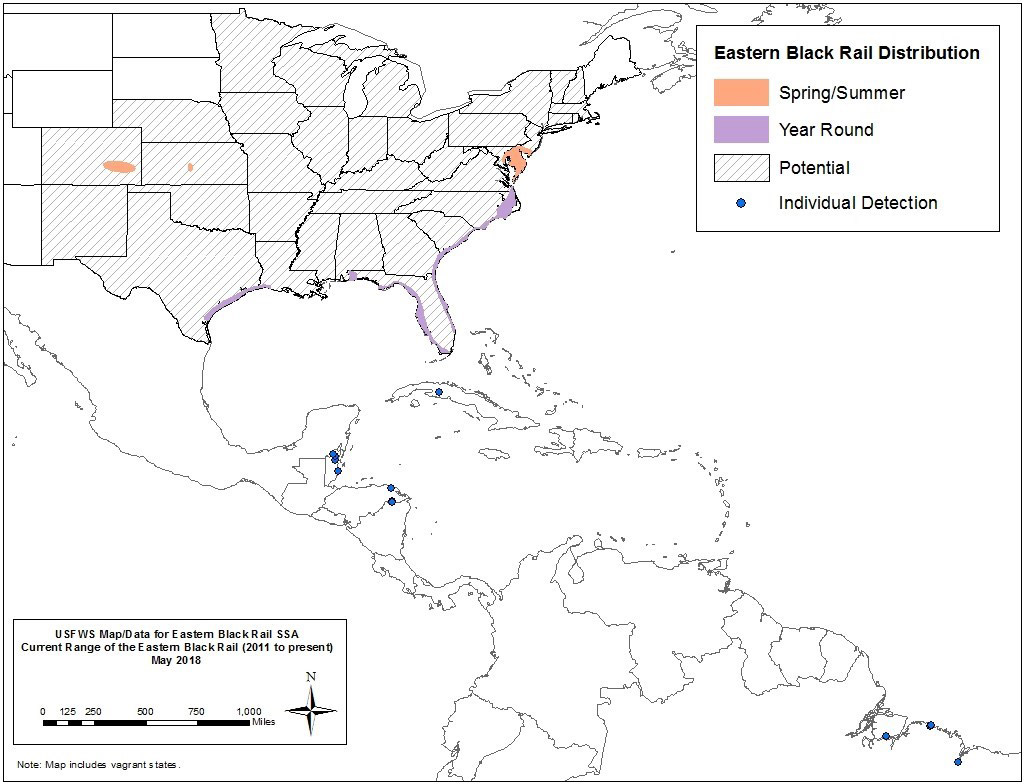 "States potentially impacted by Eastern Black Rail ""threatened"" listing are identified in the map above (Source: U.S. Fish and Wildlife Service)"